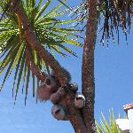 Geographically challanged koala