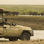 Fantastic game viewing opportunities as large populations of Elephant and Buffalo congregate in