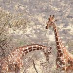 Foto de Samburu Game Lodge