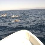 Dolphin watching With Omar's sport fishing