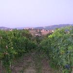 Photo of Agriturismo La Ginestrella