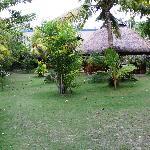 Ravenala Garden