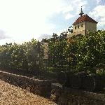 St. Claire's Vineyard
