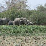 Elephants seen on the walking tour.
