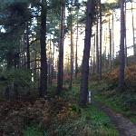Dalby Forest Red Route Cycle Track