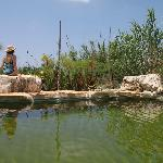 The ecological swimming pool