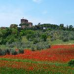 Tuscany ( Val D'orcia )