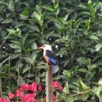 Bird in hotel garden
