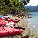 Kayaking the Sounds of Marlborough
