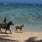 Horses on the beach too