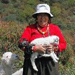 Hiking & Herding with Amma