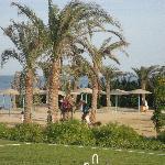 kamelridning på stranden