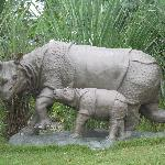 Model of Rhino- one of the many beautiful models