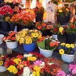 お花は安くて持って帰りたかった。。