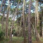 bosque de carilo