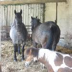 es gibt Pferde und Ponys