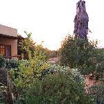 The Gumtree garden