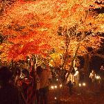 Nagatoro Fall Illumination