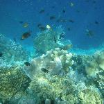 Another life under the sea. If we use professional underwater camera, I believe it'll turn out e