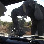 Kruger Park greeting