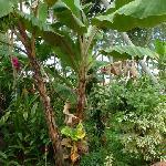 kadalamma Garden