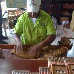 exursion eco caraibe entre autre fabrique de cigare