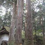 三本杉にも歴史あり