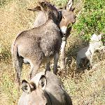 Les Rayes is also a donkey farm