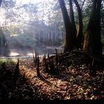 Moody Forest - Baxley, GA