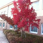 back courtyard in Autumn