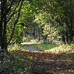 This wooded path runs along the back of the lodges