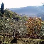 Olivenhain + Aussicht