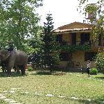 Sapana Lodge - the elephants are coming back from safari