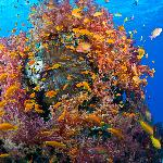 Corals!!!!