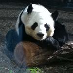 mr. panda was posing!
