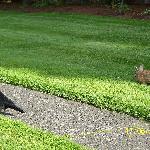 Bunny & Crow