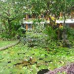 garden/pond view