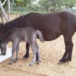 Nuestros ponis
