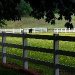 Horses next door