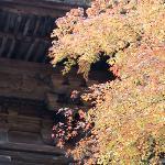 山門に添える紅葉