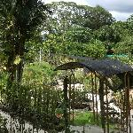 Panorama of Orchid Garden