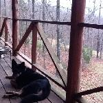 Happy dog on the porch at Cabin #1