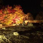 枯山水とライトアップされた紅葉