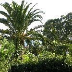 Vue sur mer ... derrière le palmier.