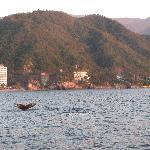 Baleine en face de l'hôtel pendant ''Rhythm of the Night''