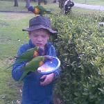 Feeding the lorrikeets Oct 2010