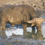 Even the Buffalo needed to cool down.