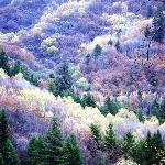 Scenic forests