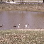 Lovely swans & geese to enjoy there!