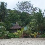 tamaraw view